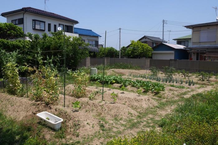 [Challenge100] 迫る初夏・地獄の雑草