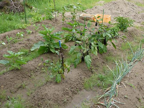 庭が最盛期を迎えました