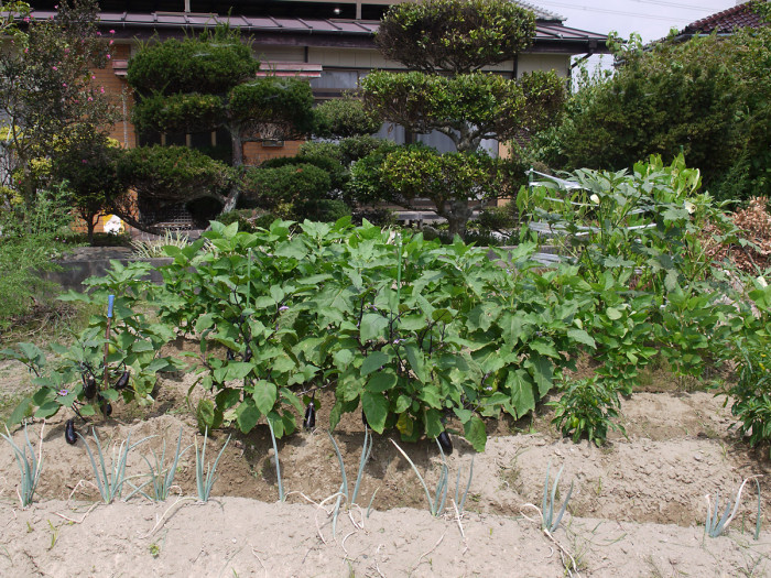 [Challenge100]夏野菜総決算