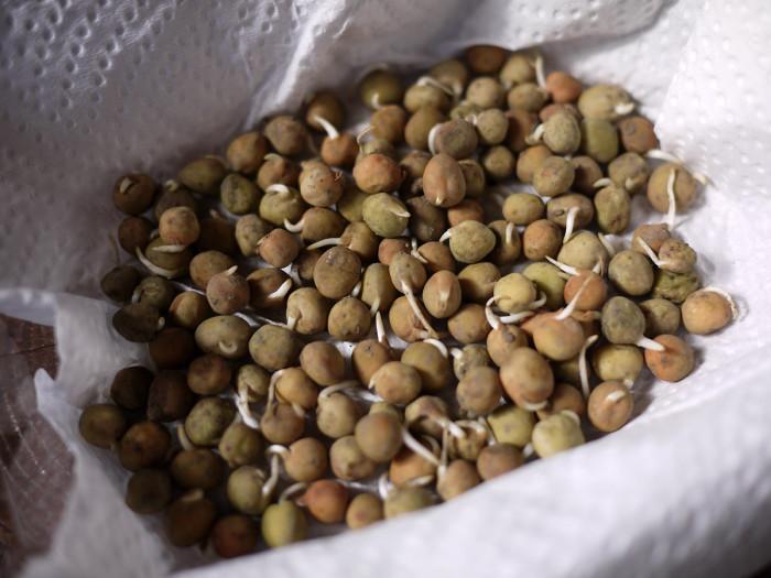黒豆・落花生の収穫と新たな豆の栽培