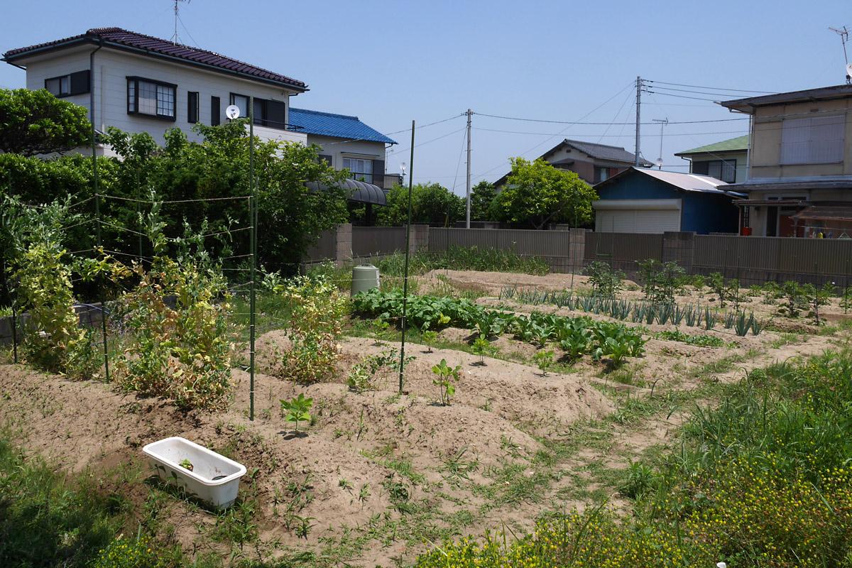 迫る初夏・地獄の雑草
