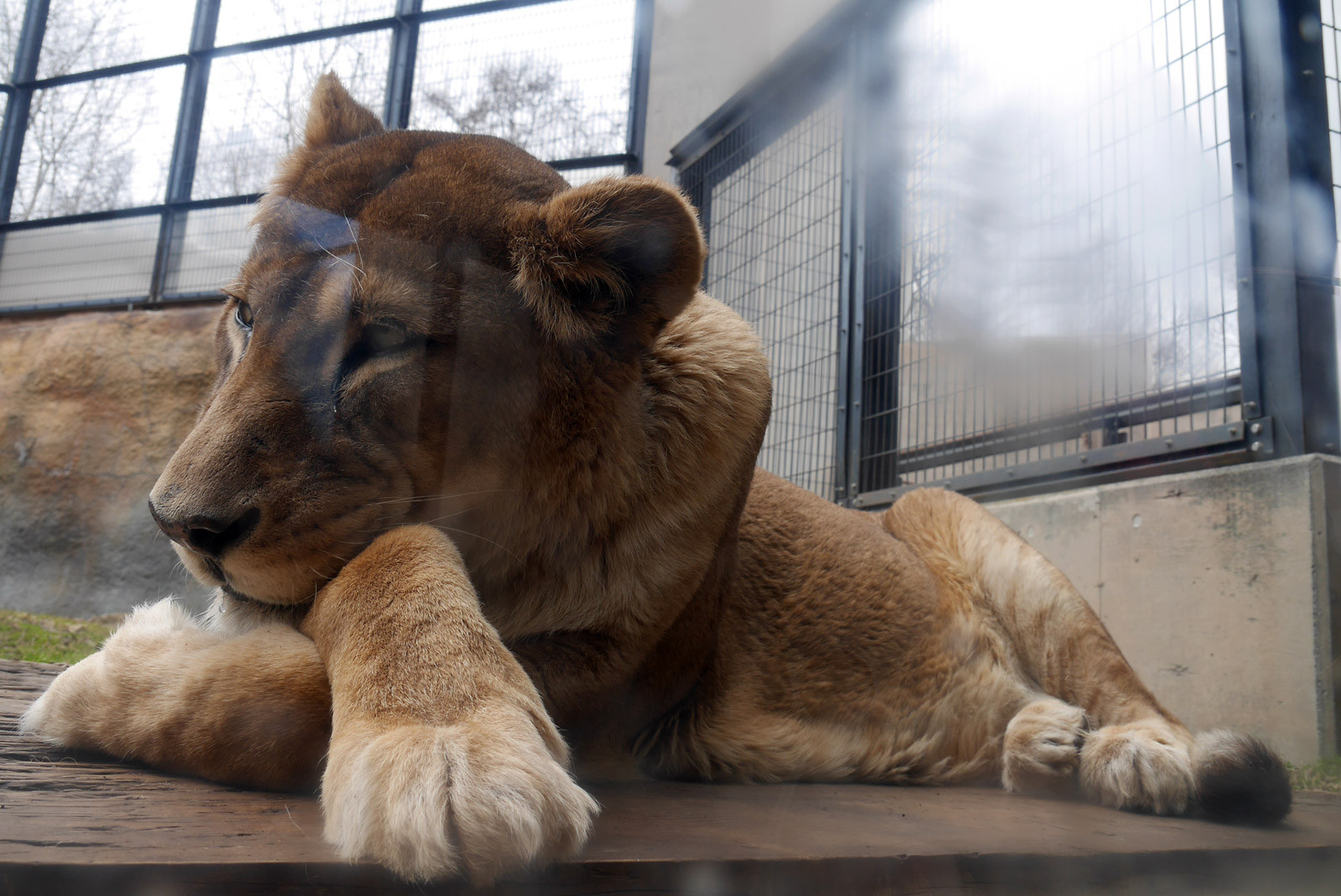 激寒の旭山動物園でみた動物たち