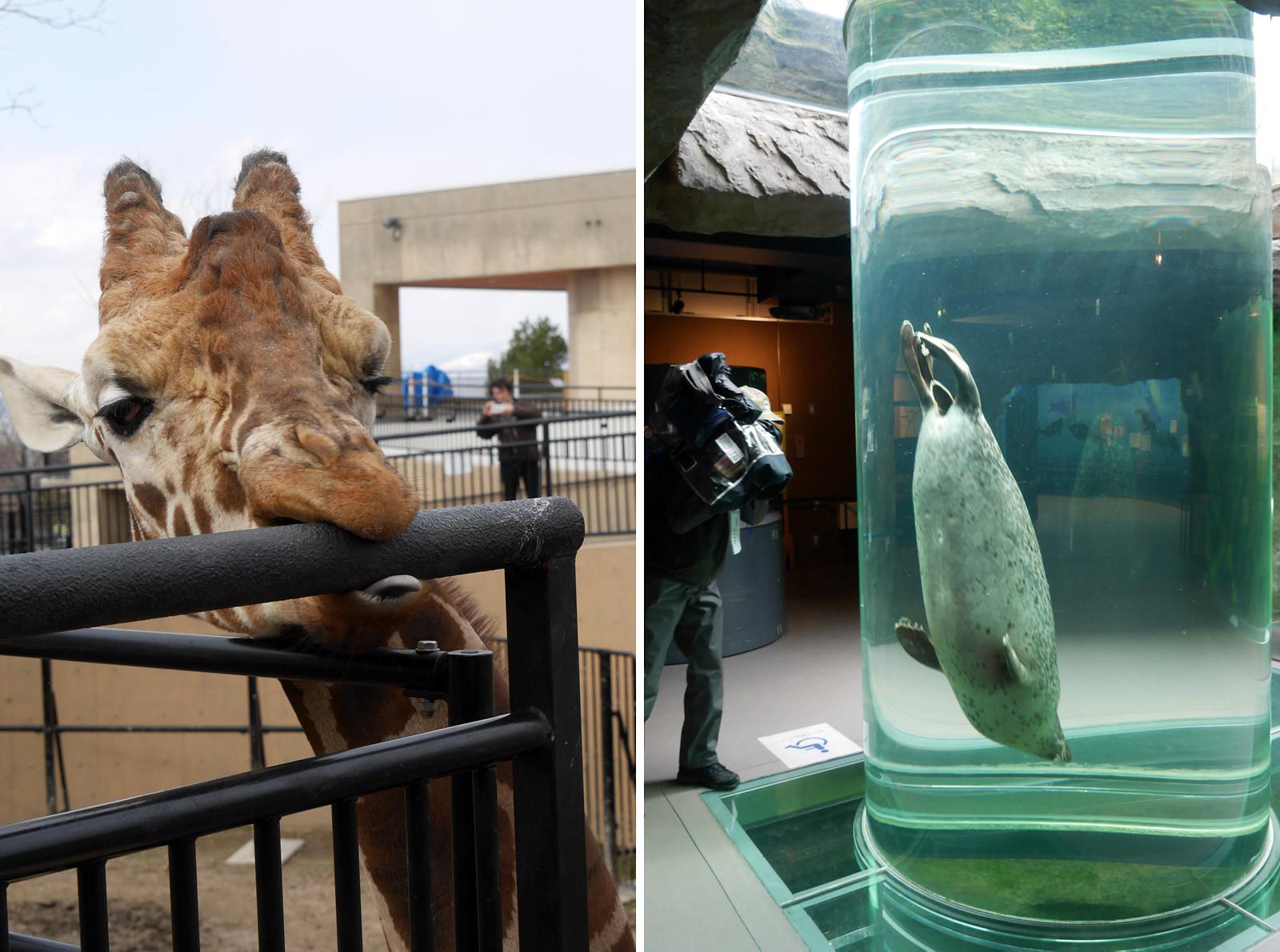 激寒の旭山動物園