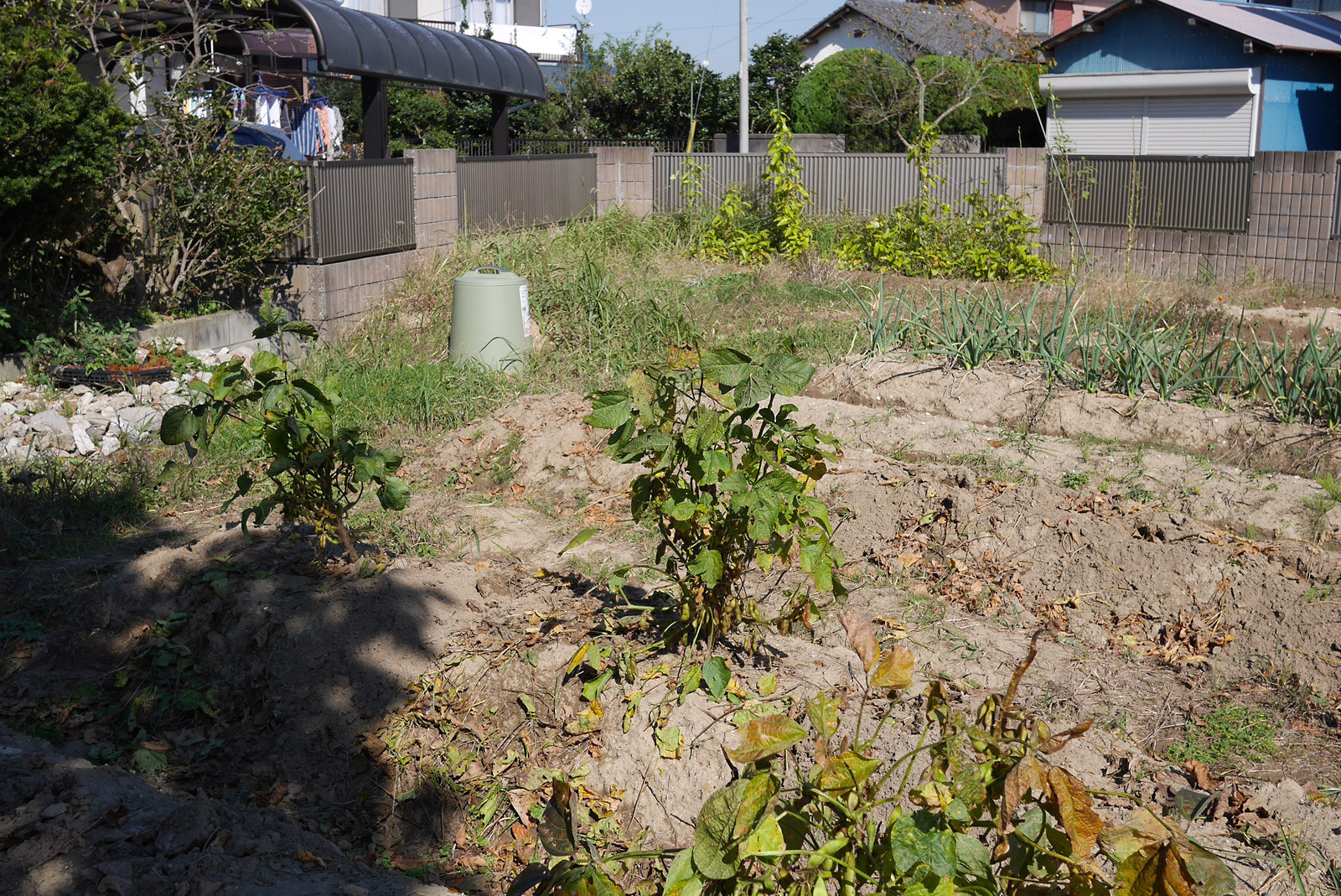 [Clg100] 菜園第3期、はじまってます