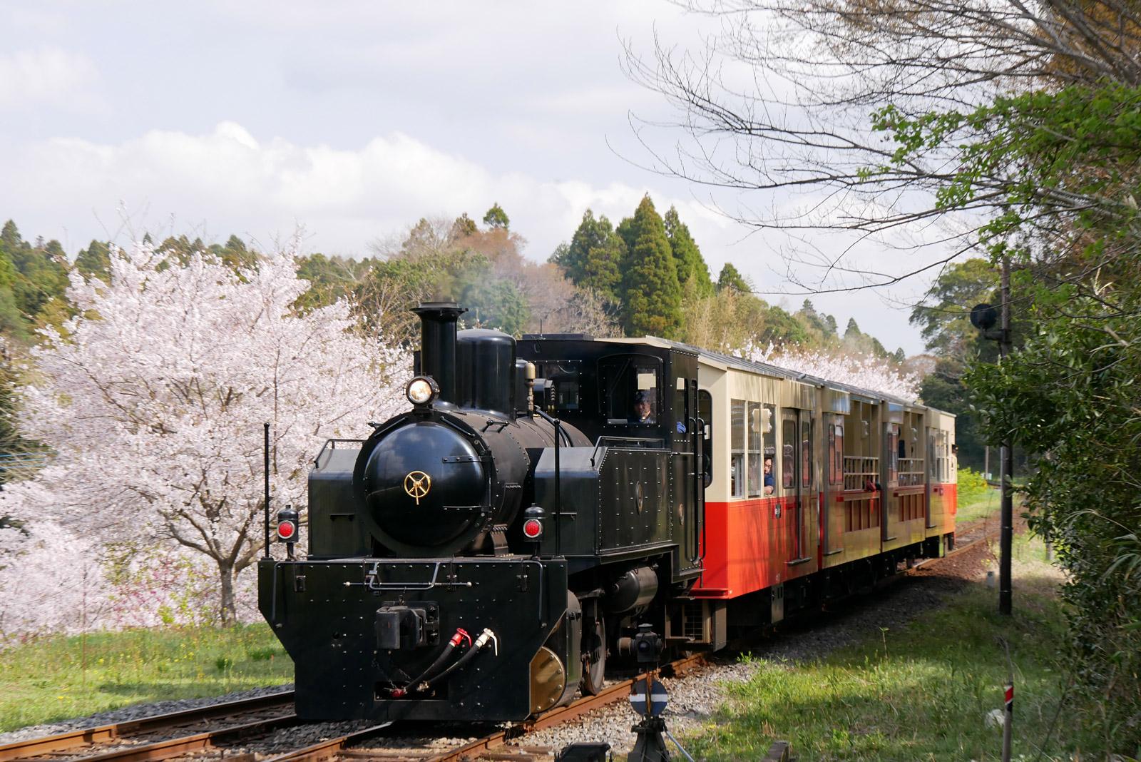 里山トロッコ3度目の春とお花見